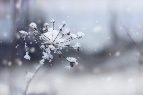 plante-hiver